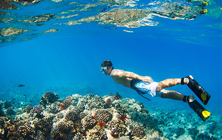 Snorkeling Kaanapali Beach Things To Do In Local Area And Activities